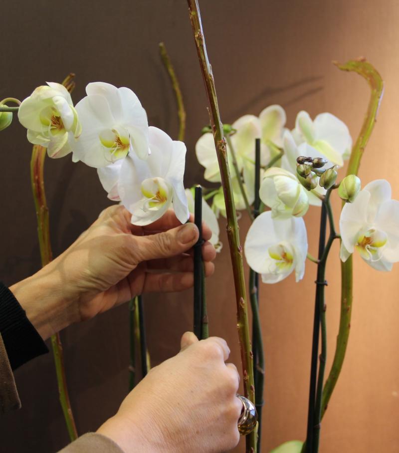 vente en ligne d 39 orchid es blanches rares et vari es